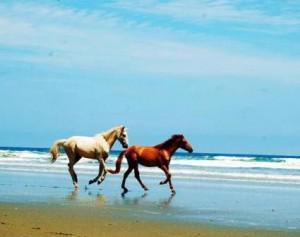 Olon Beach Horses