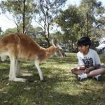 Kangaroo and Kid