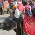 India Elephant Ride
