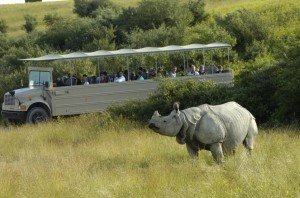 Go on an open-air safari at the Wilds.