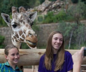 Discover America's only mountain zoo and the new Encounter Africa exhibit