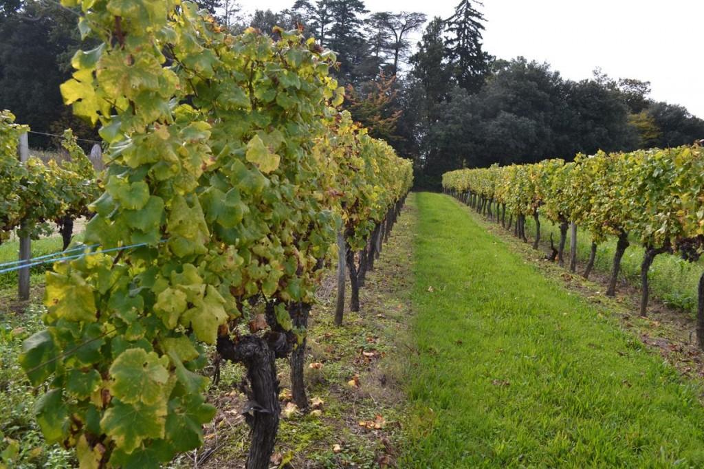 Dordogne Vineyard