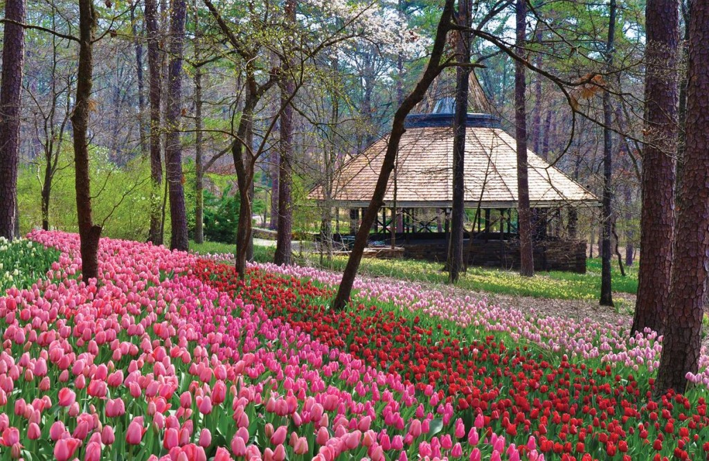 Bountiful Botanical Beauty Awaits In The Southern United States