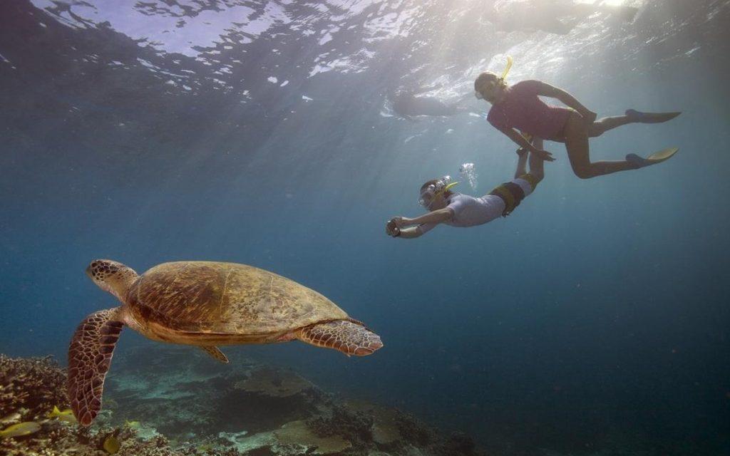 Australian Adventures on Land and Sea