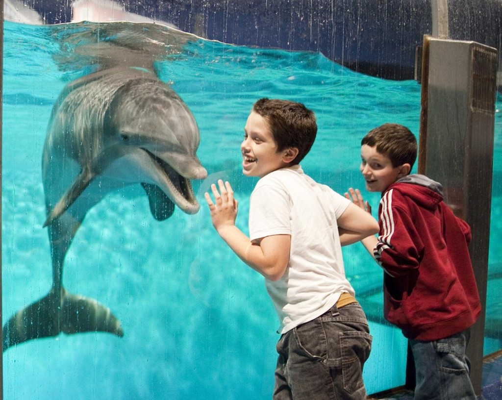 Indianapolis Zoo is a great thing to do in indianapolis