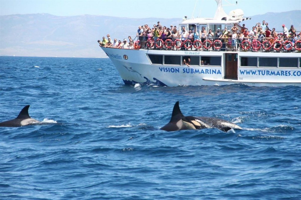 Whale watching in Tarifa