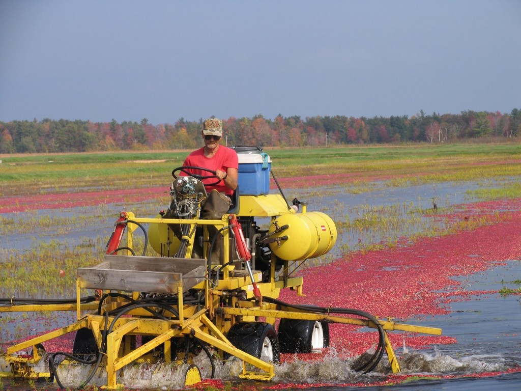 Fall tours provide a close-up look at cranberry harvesting