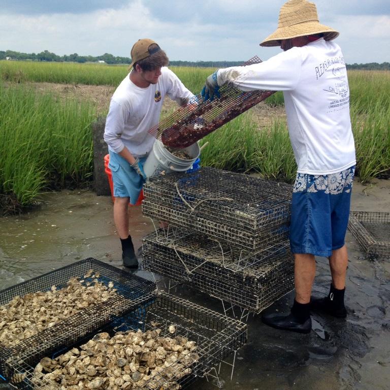 Chesapeake Bay - Oyster Farm Tour resized