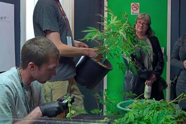Grow Tour. Photo Courtesy of My 420 Tours