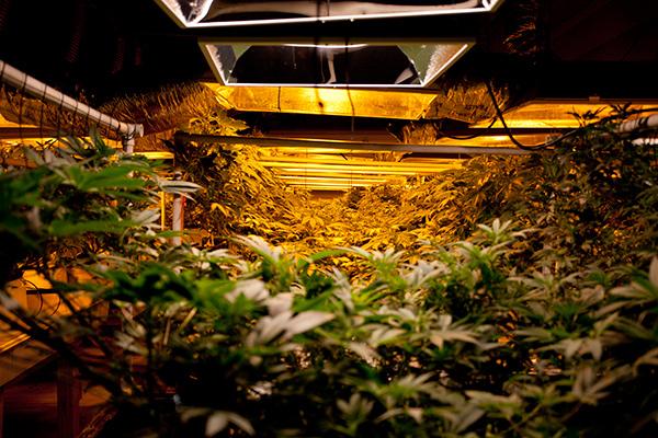 Denver's Cannabis Tours Attracts Diverse Clientele