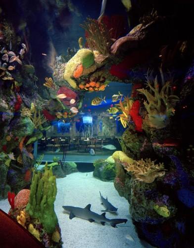 Denver Downtown Aquarium 2