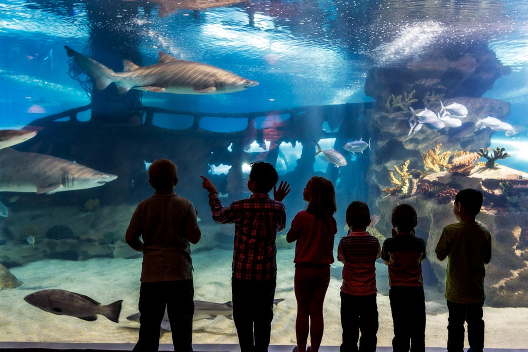 Greater Cleveland Aquarium Sharks And Kids
