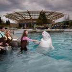 Mystic Aquarium Beluga
