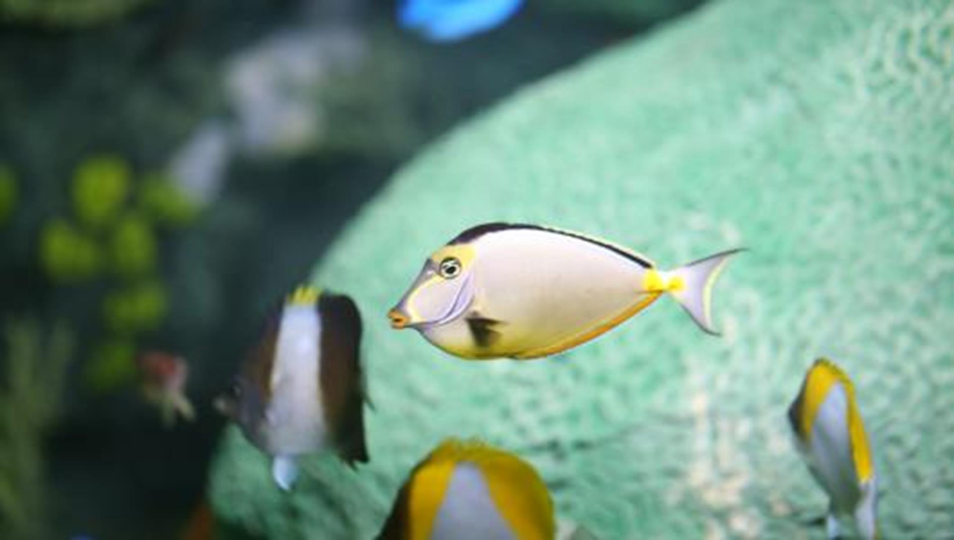Fish in ripleys aquarium - 16 Must Visit Aquariums In 2016