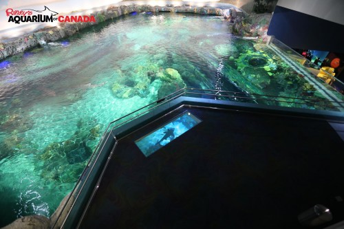 Ripley's Toronto Dangerous Lagoon