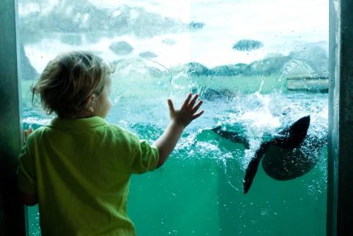 Seattle Aquarium 5