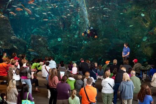 Seattle Aquarium 8