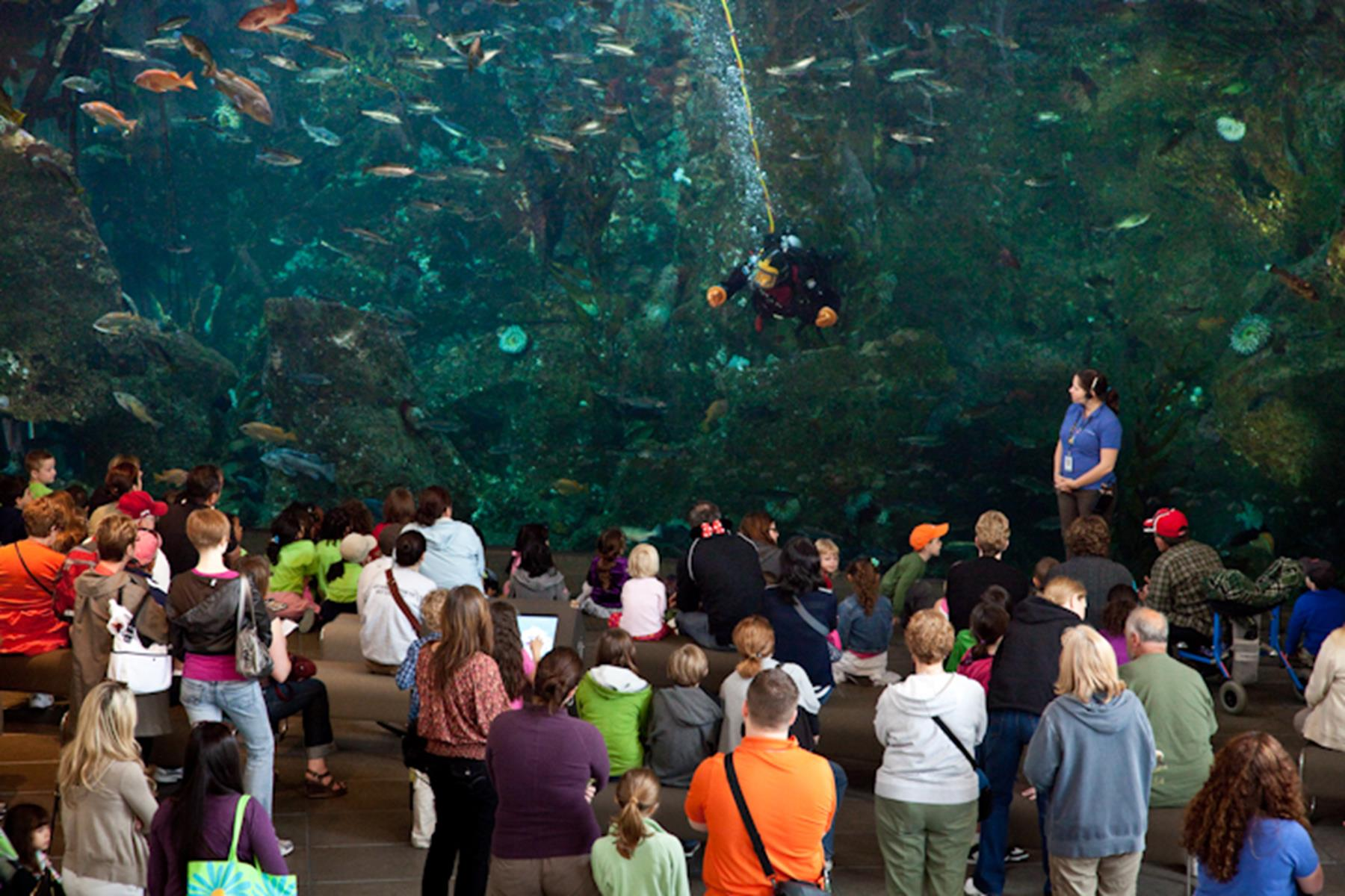 Learn About Life Under the Sea at Outstanding Aquariums in the West