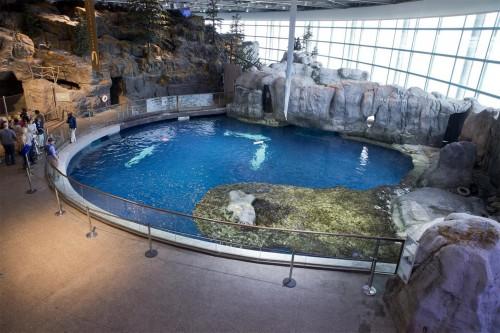 Shedd Abbott Oceanarium