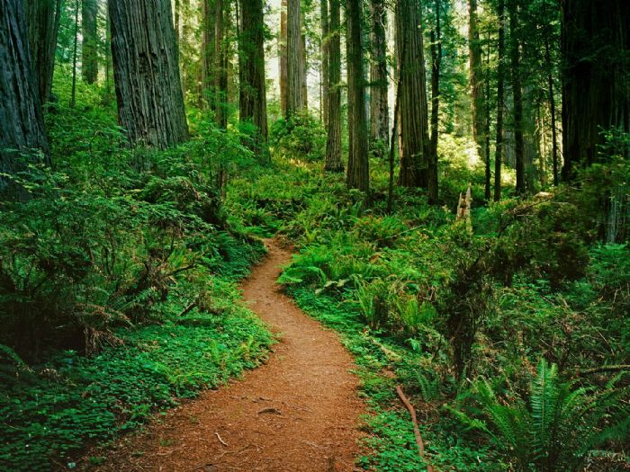 4 North American Forests You Must Visit