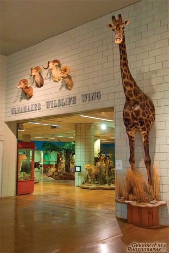 Northwestern Wildlife Museum