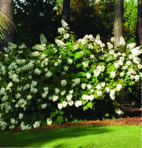 aldridge-botanical-gardens