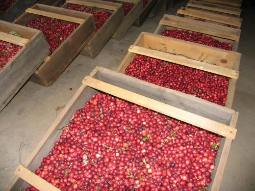 Cranberries in Box