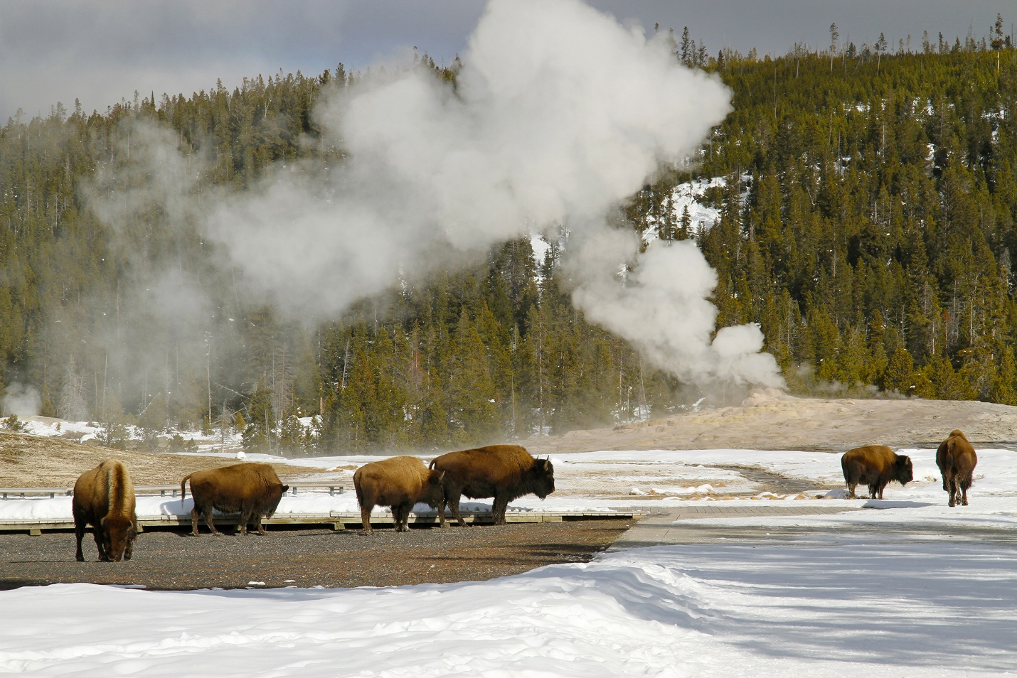 Western Itinerary: Winter In Yellowstone
