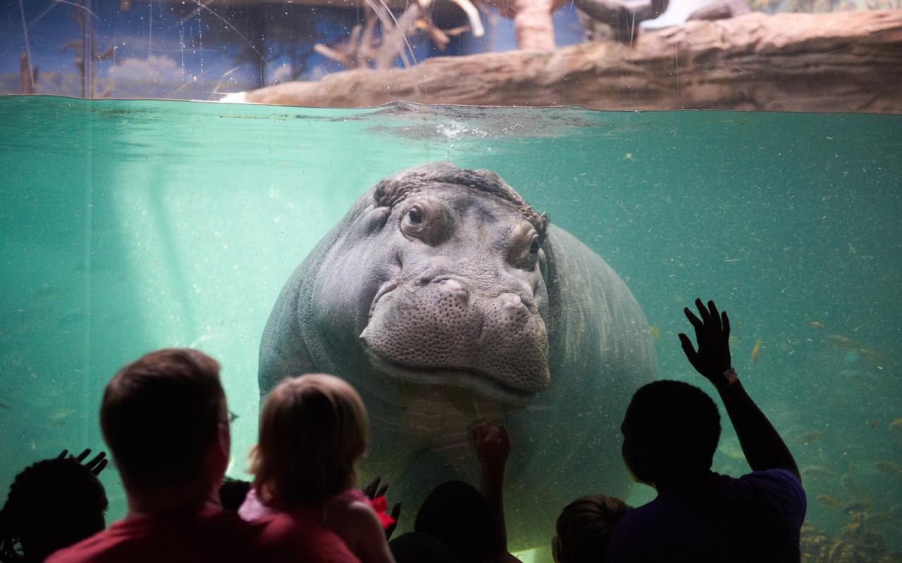 4 Top Us Aquariums For 2017 Leisure Group Travel