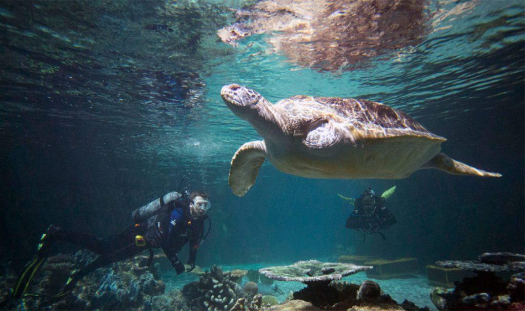 4 Top Us Aquariums For 2017