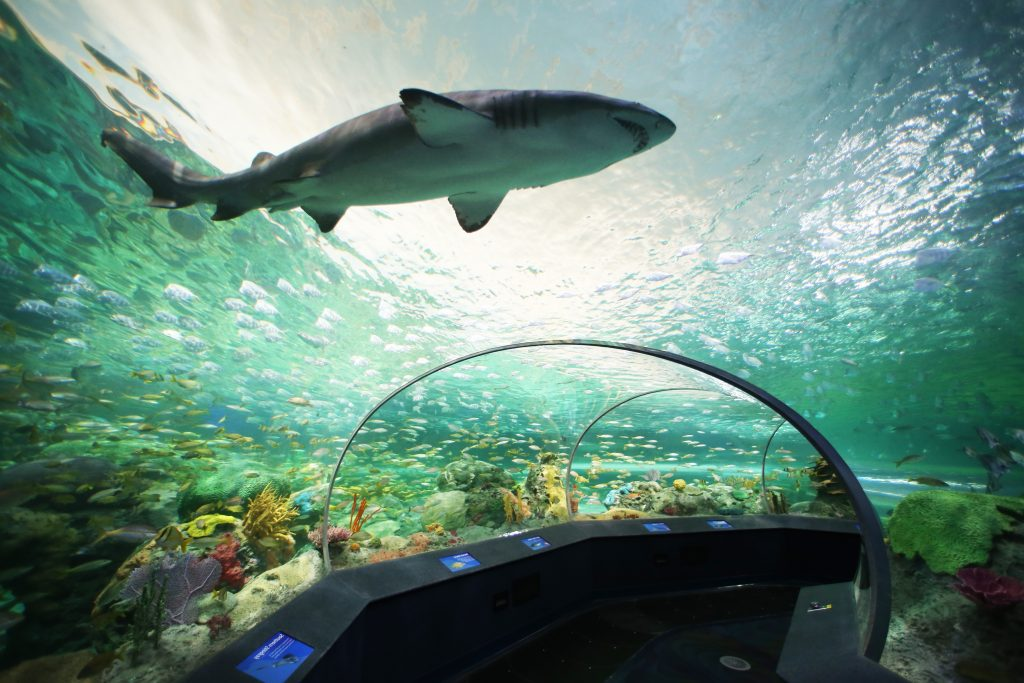 3 Ripley Aquariums To Inspire The Imagination