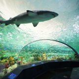 3 Ripley Aquariums to Inspire the Imagination
