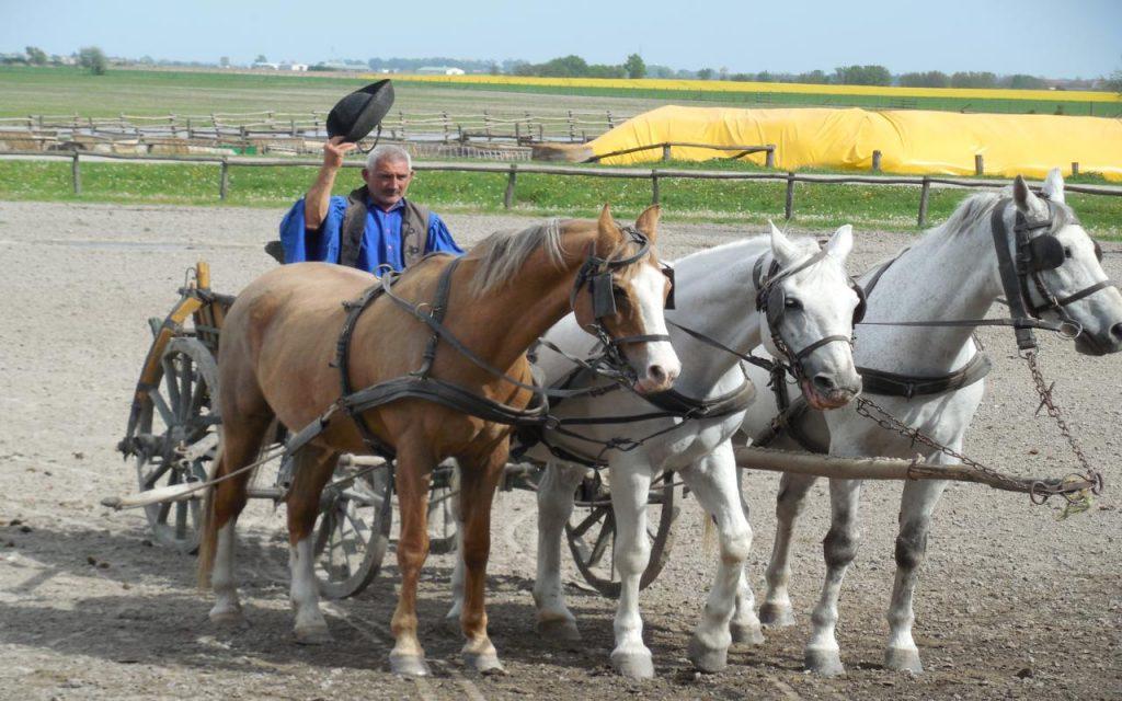 Kalosca Horse Show