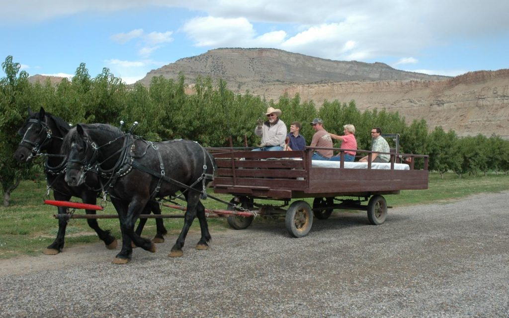 Horse-Drawn Orchard Tour