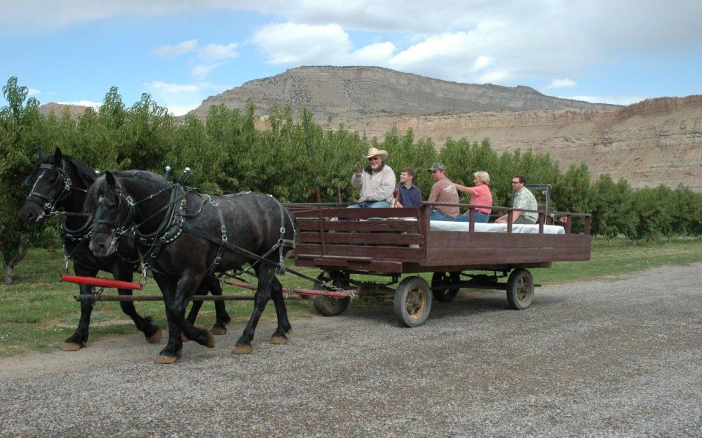 Colorado Agritourism - Horse-Drawn Orchard Tour