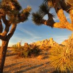 Joshua Tree National Park in California's desert region.