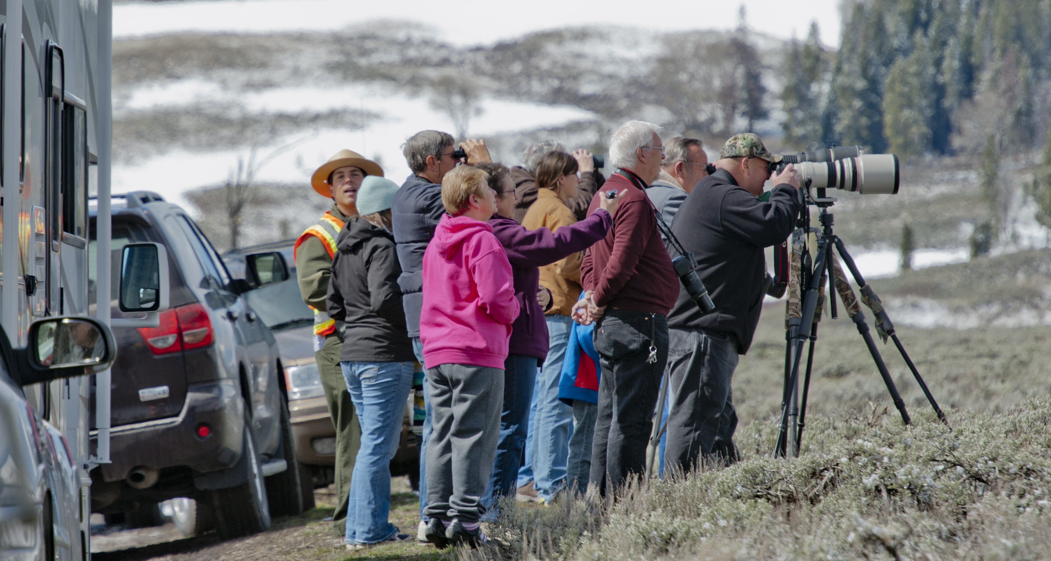 Bison Observation in Yellowstone National Park