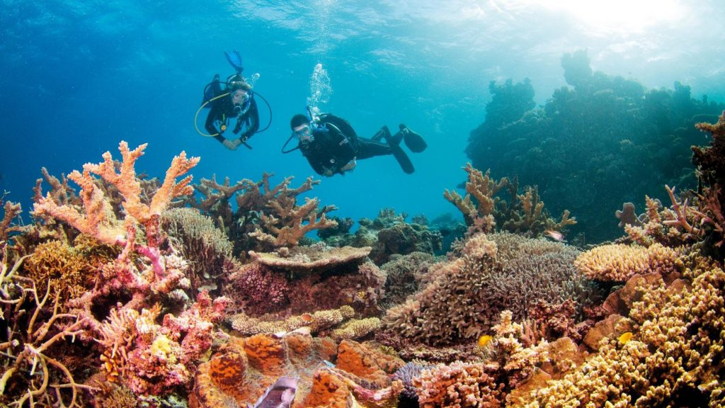 Scuba diving excursion at the Great Barrier Reef