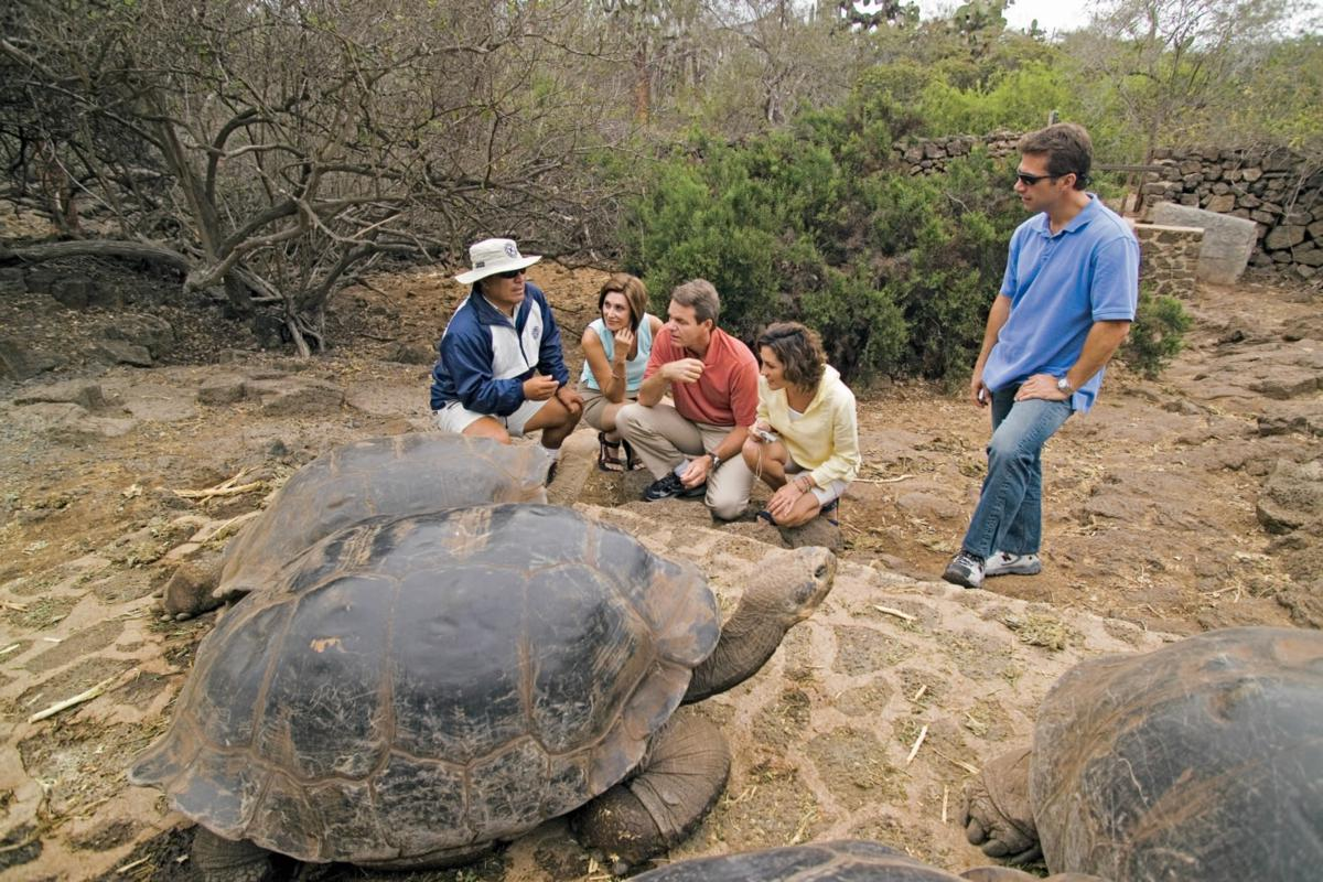 Celebrity Galapagos Tortoise #2_1200x800