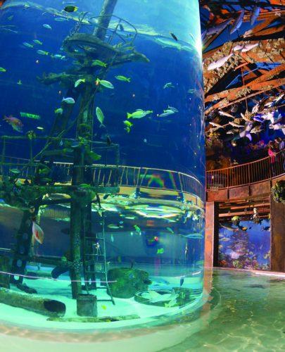 missouri aquarium
