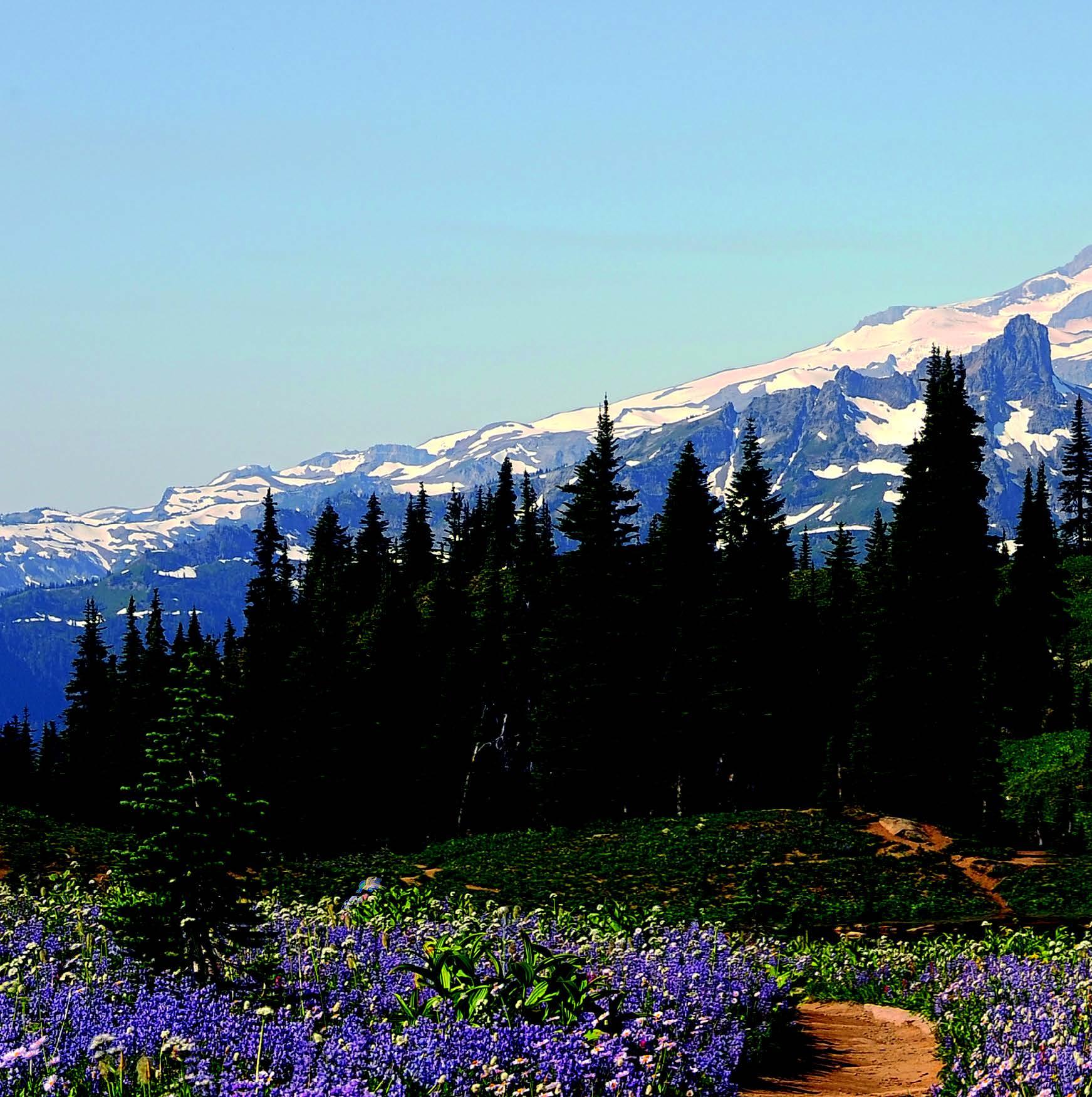 5 Memorable Days in Washington State