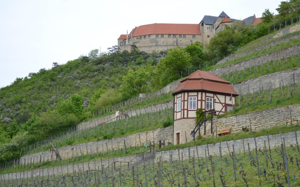Germany vineyard