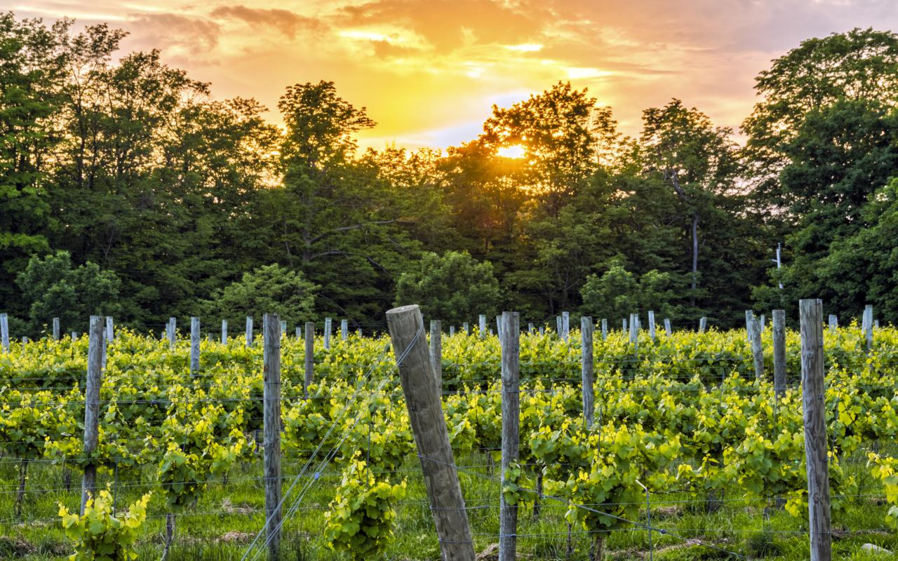 Colloca Winery in Cayuga County - Photo credit to Kyle Meddaugh