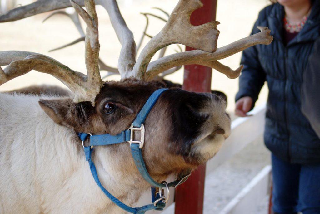 Hardys Reindeer Ranch