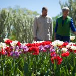 Soft Adventures: Gardens and State Parks