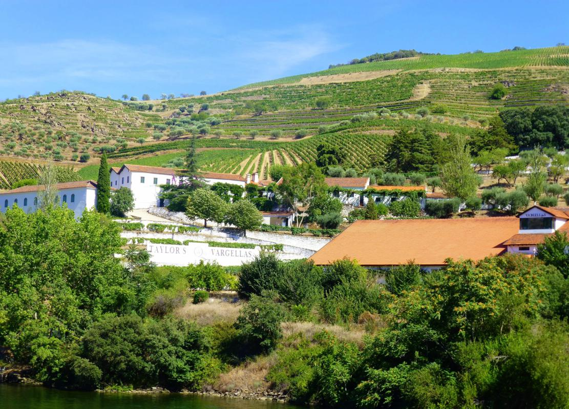 Lovely Vineyard Views Along the Douro