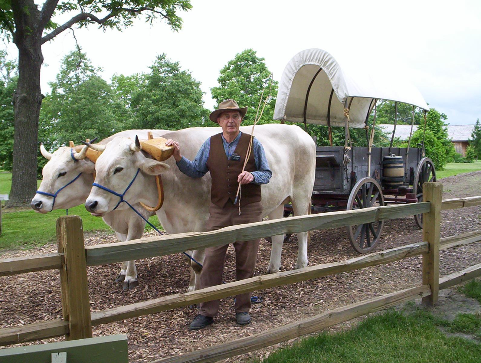 Nauvoo Oxen Carriage Rides