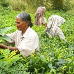 7 Family-Friendly Days in Sri Lanka