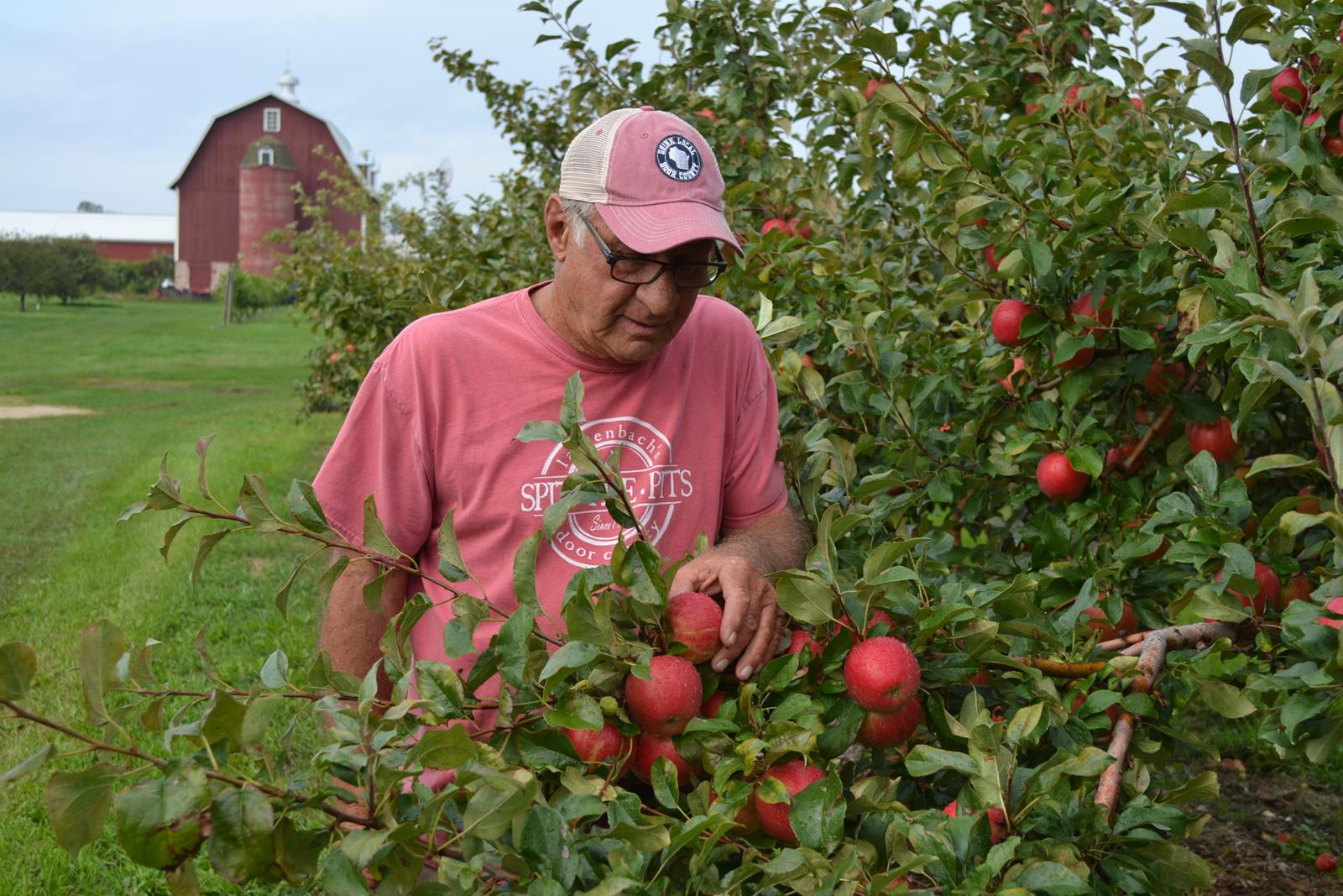Bob Lautenbach of Lautenbach's Orchard Country Winery & Market inspects red apples in his