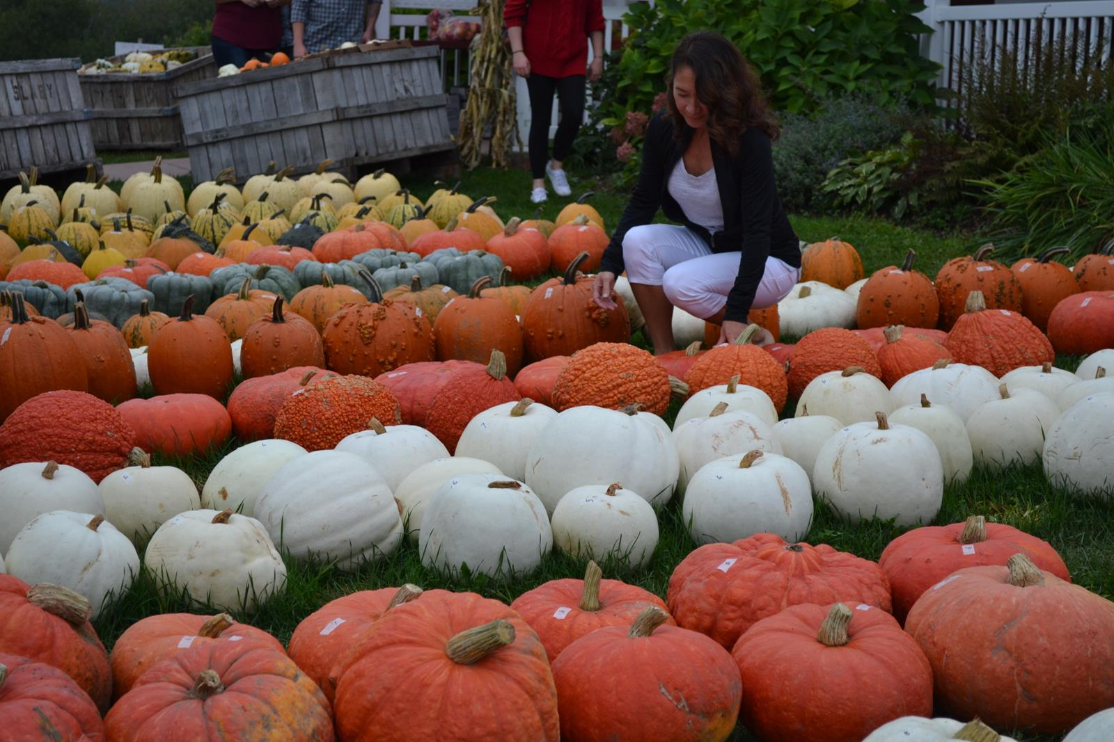 Pumpkins for sale at many of the Door County markets make for colorful shopping